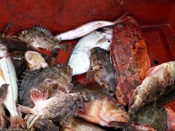 Toutes les annonces pour le tag bouillabaisse - Restaurant poisson marseille vieux port ...